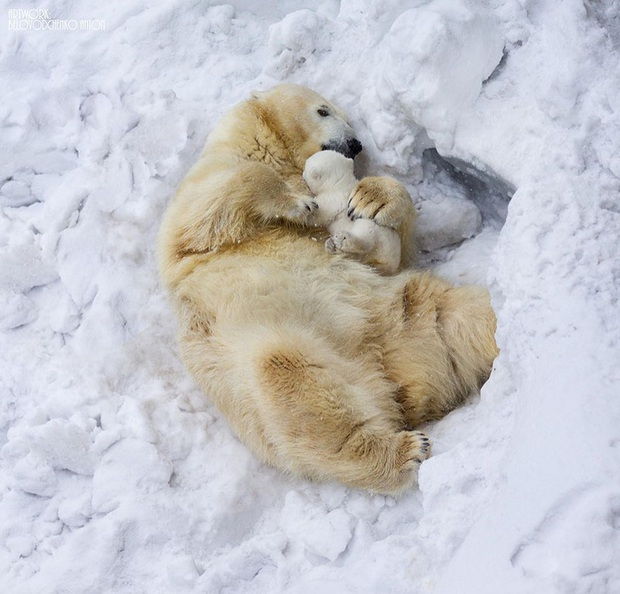 """24 khoảnh khắc ngọt ngào """"đốn tim"""" về tình mẫu tử của động vật hoang dã Photo-1-15822693917591555080904"""
