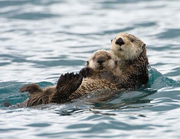 """24 khoảnh khắc ngọt ngào """"đốn tim"""" về tình mẫu tử của động vật hoang dã Photo-11-15822693917711567805820"""