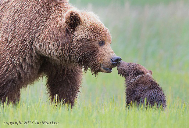 """24 khoảnh khắc ngọt ngào """"đốn tim"""" về tình mẫu tử của động vật hoang dã Photo-13-1582269391775870037842"""