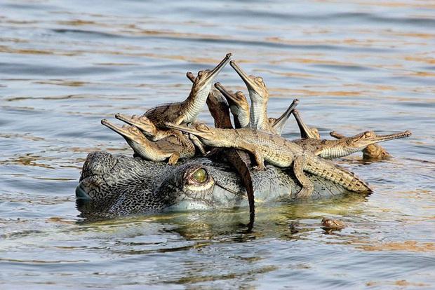 """24 khoảnh khắc ngọt ngào """"đốn tim"""" về tình mẫu tử của động vật hoang dã Photo-16-15822693917771006268691"""