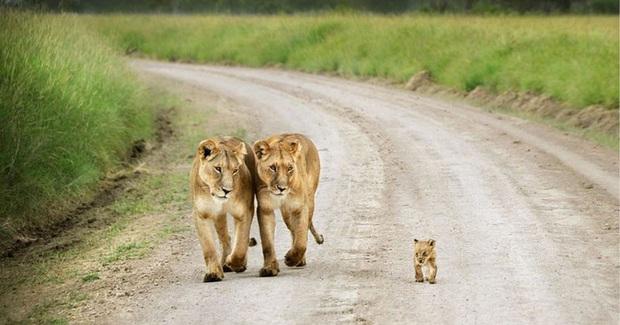 """24 khoảnh khắc ngọt ngào """"đốn tim"""" về tình mẫu tử của động vật hoang dã Photo-2-1582269391761932866"""