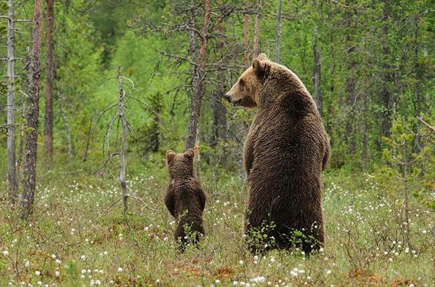 """24 khoảnh khắc ngọt ngào """"đốn tim"""" về tình mẫu tử của động vật hoang dã Photo-23-1582269391783961080631"""