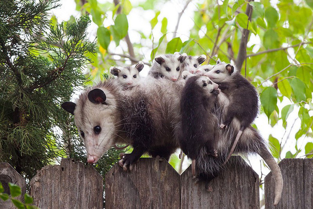 """24 khoảnh khắc ngọt ngào """"đốn tim"""" về tình mẫu tử của động vật hoang dã Photo-3-1582269391762980827475"""