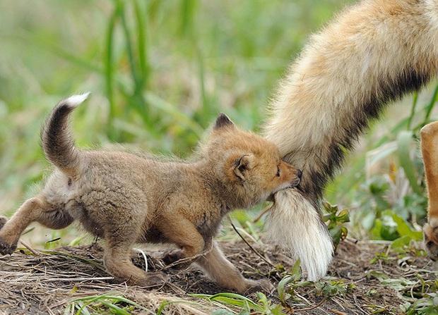 """24 khoảnh khắc ngọt ngào """"đốn tim"""" về tình mẫu tử của động vật hoang dã Photo-4-15822693917631694578574"""