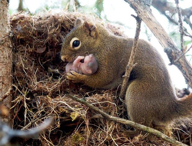 """24 khoảnh khắc ngọt ngào """"đốn tim"""" về tình mẫu tử của động vật hoang dã Photo-6-1582269391765904516694"""
