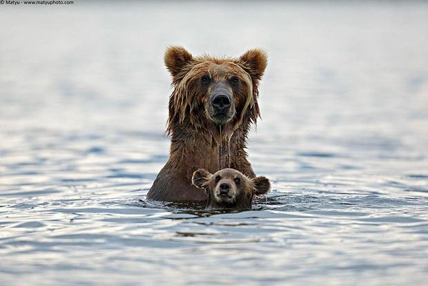 """24 khoảnh khắc ngọt ngào """"đốn tim"""" về tình mẫu tử của động vật hoang dã Photo-7-15822693917671554233161"""