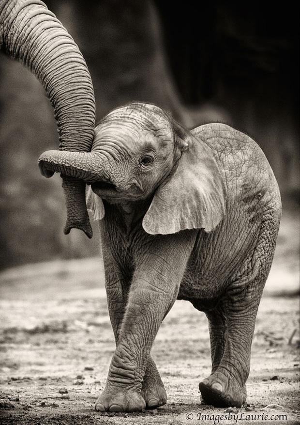 """24 khoảnh khắc ngọt ngào """"đốn tim"""" về tình mẫu tử của động vật hoang dã Photo-9-1582269391769687779692"""