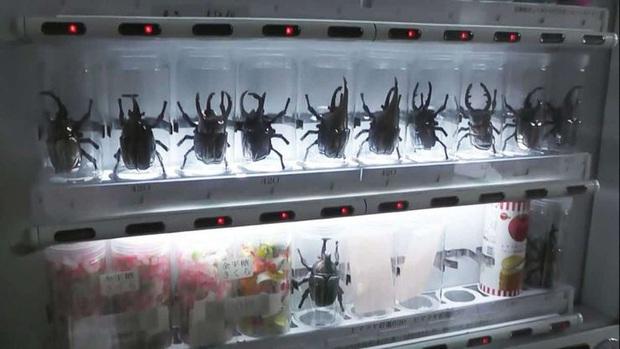 """""""Vũ trụ"""" máy bán hàng tự động ở Nhật Bản, nhiều loại độc lạ đến nỗi khiến du khách ngỡ mình đang lạc vào hành tinh khác (Phần 1) - Ảnh 9."""