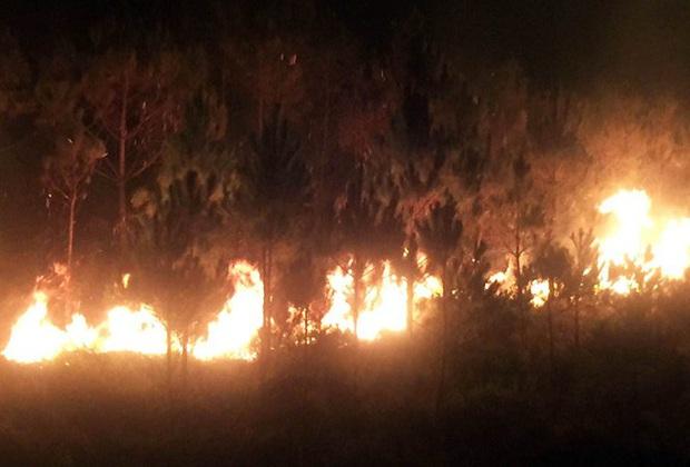 Rừng thông trên núi Đại Bình cháy dữ dội - Ảnh 3.