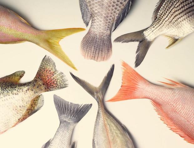 Ăn cá rất tốt cho sức khỏe nhưng có 4 quan niệm sai lầm mà nhiều người vẫn đang phạm phải khiến cơ thể bị nhiễm độc - Ảnh 3.