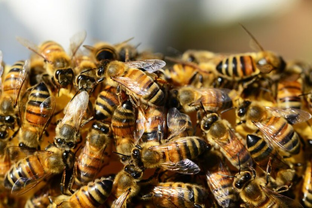 Đến giải cứu người bị một con ong chích, nhóm lính cứu hộ bỗng chuốc họa khi anh em họ hàng nhà ong kéo gần 40.000 con tới tiếp ứng - Ảnh 2.