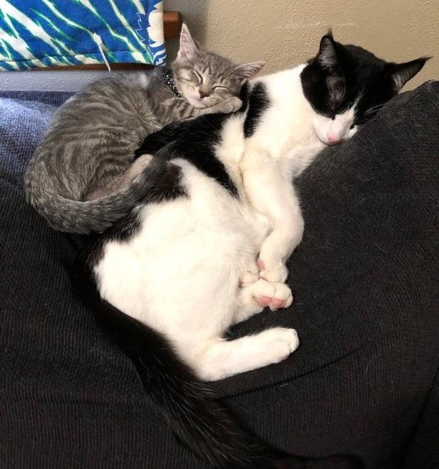 Loạt ảnh cực kỳ dễ thương của động vật mà sau khi xem xong thì bạn chỉ muốn ôm hết tất cả vào lòng và nựng - Ảnh 15.