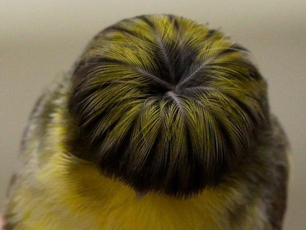 Chú chim nhỏ gây bão mạng vì sở hữu mái tóc y chang nhân vật trong phim Tầng lớp Itaewon - Ảnh 3.