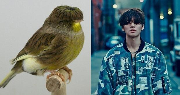 Chú chim nhỏ gây bão mạng vì sở hữu mái tóc y chang nhân vật trong phim Tầng lớp Itaewon - Ảnh 4.