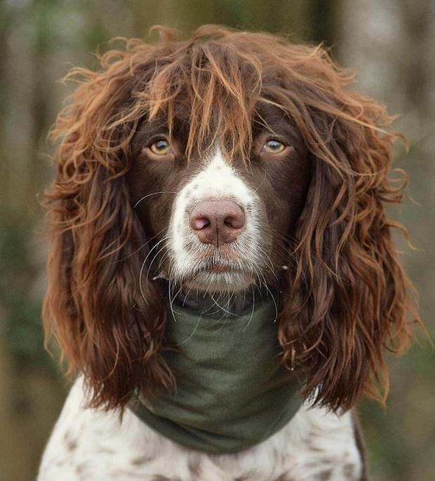 Chú chó gây sốt MXH khi sở hữu mái tóc dài và xoăn tít y như những siêu sao nhạc rock nhưng đôi mắt lại thẫn thờ, mơ màng như tài tử điện ảnh - Ảnh 3.