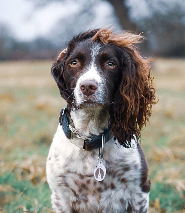 Chú chó gây sốt MXH khi sở hữu mái tóc dài và xoăn tít y như những siêu sao nhạc rock nhưng đôi mắt lại thẫn thờ, mơ màng như tài tử điện ảnh - Ảnh 4.