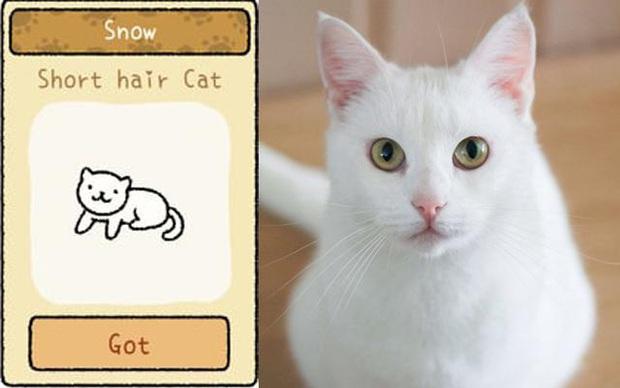 Đi tìm 12 chú mèo khó chiều trong Adorable Home phiên bản thật, bấn loạn với độ cute vô đối của những hoàng thượng siêu quậy! - Ảnh 2.