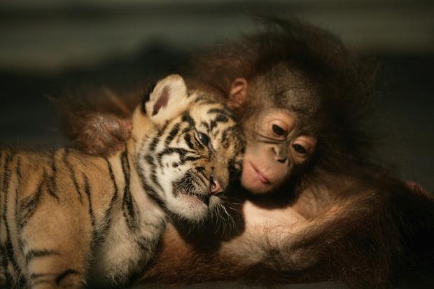 8 sự thật chứng minh các loài vật có thể giống con người đến mức đáng kinh ngạc, thậm chí còn giàu cảm xúc hơn chính chúng ta - Ảnh 2.