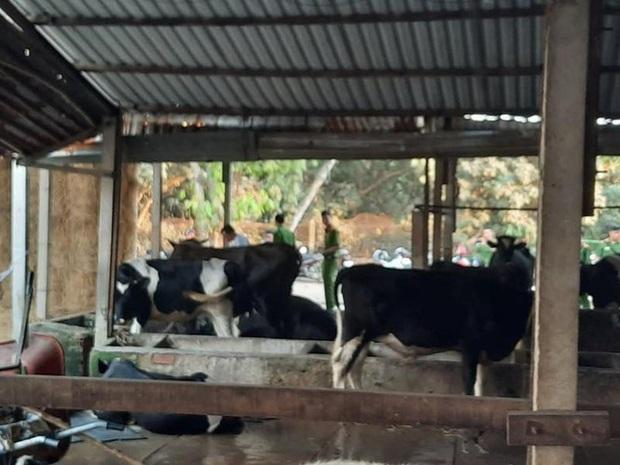 Yêu cầu Tuấn khỉ bồi thường 40 triệu đồng bắn chết bò - Ảnh 2.