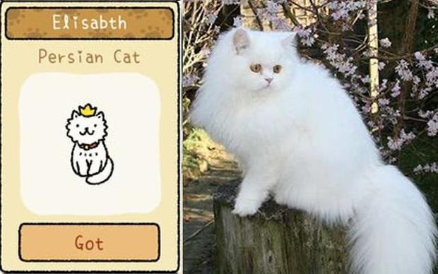 Đi tìm 12 chú mèo khó chiều trong Adorable Home phiên bản thật, bấn loạn với độ cute vô đối của những hoàng thượng siêu quậy! - Ảnh 10.