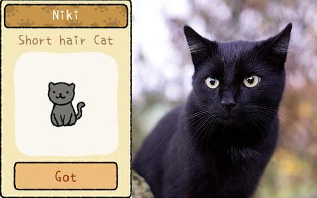 Đi tìm 12 chú mèo khó chiều trong Adorable Home phiên bản thật, bấn loạn với độ cute vô đối của những hoàng thượng siêu quậy! - Ảnh 3.