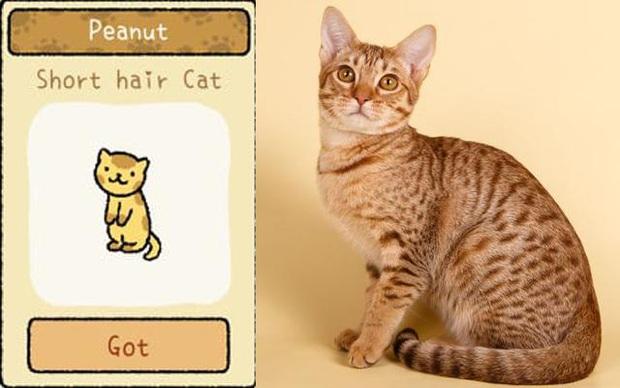 Đi tìm 12 chú mèo khó chiều trong Adorable Home phiên bản thật, bấn loạn với độ cute vô đối của những hoàng thượng siêu quậy! - Ảnh 4.