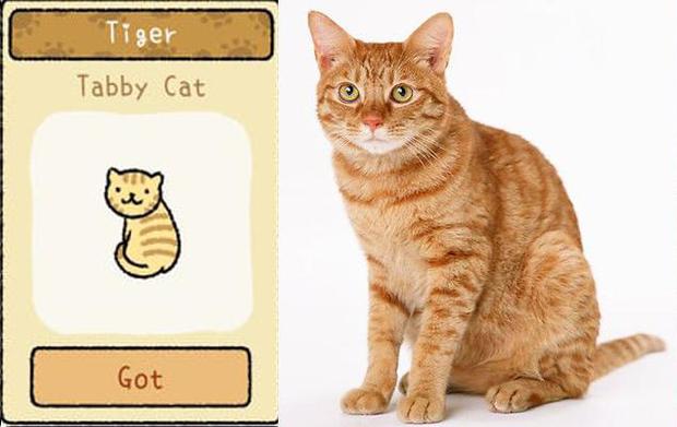 Đi tìm 12 chú mèo khó chiều trong Adorable Home phiên bản thật, bấn loạn với độ cute vô đối của những hoàng thượng siêu quậy! - Ảnh 11.