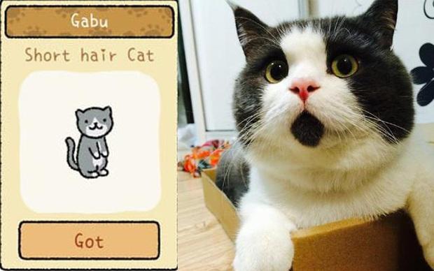 Đi tìm 12 chú mèo khó chiều trong Adorable Home phiên bản thật, bấn loạn với độ cute vô đối của những hoàng thượng siêu quậy! - Ảnh 8.