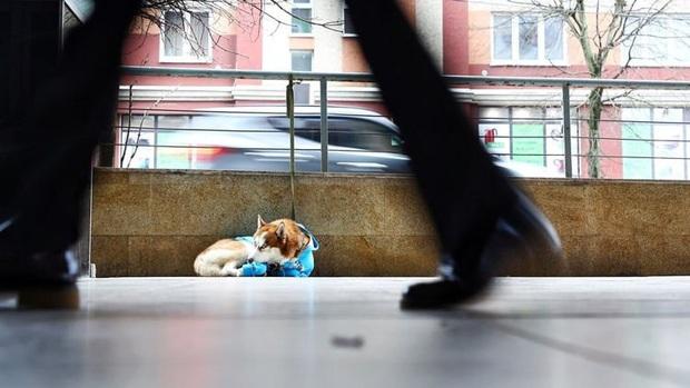 Câu chuyện về Hachiko của nước Nga: chú chó Husky mặc tấm áo màu xanh dương, ngày ngày nằm ngoài vỉa hè giá rét chờ chủ nhân đi làm về - Ảnh 3.