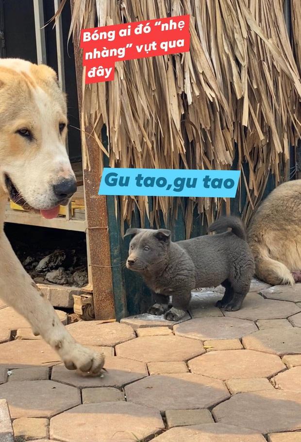 Trước chó Nguyễn Văn Dúi hút triệu like, những đại boss này đã nổi như cồn: Đi tới đâu cũng được săn đón, có fan gửi quà mỗi tháng nữa cơ - Ảnh 5.