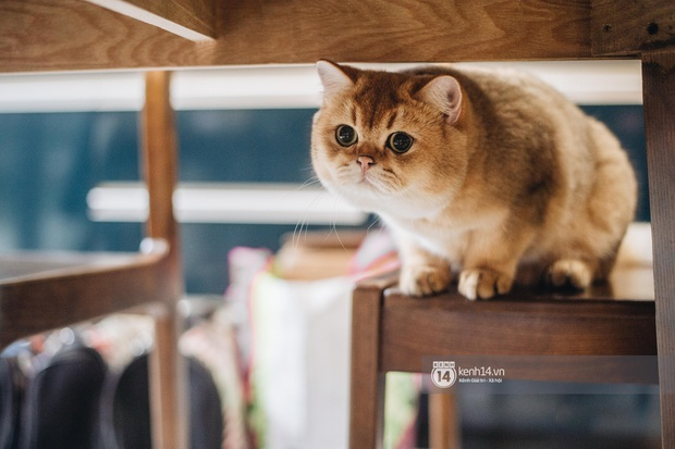 Thằng điên trở về từ Pháp với 500kg hành lý + 8 con mèo và chuyện con sen nuôi dạy dàn đại boss nghìn đô - Ảnh 4.