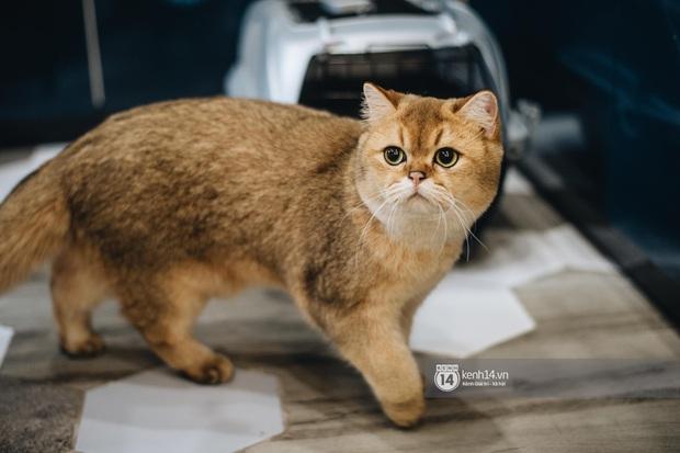 Thằng điên trở về từ Pháp với 500kg hành lý + 8 con mèo và chuyện con sen nuôi dạy dàn đại boss nghìn đô - Ảnh 9.