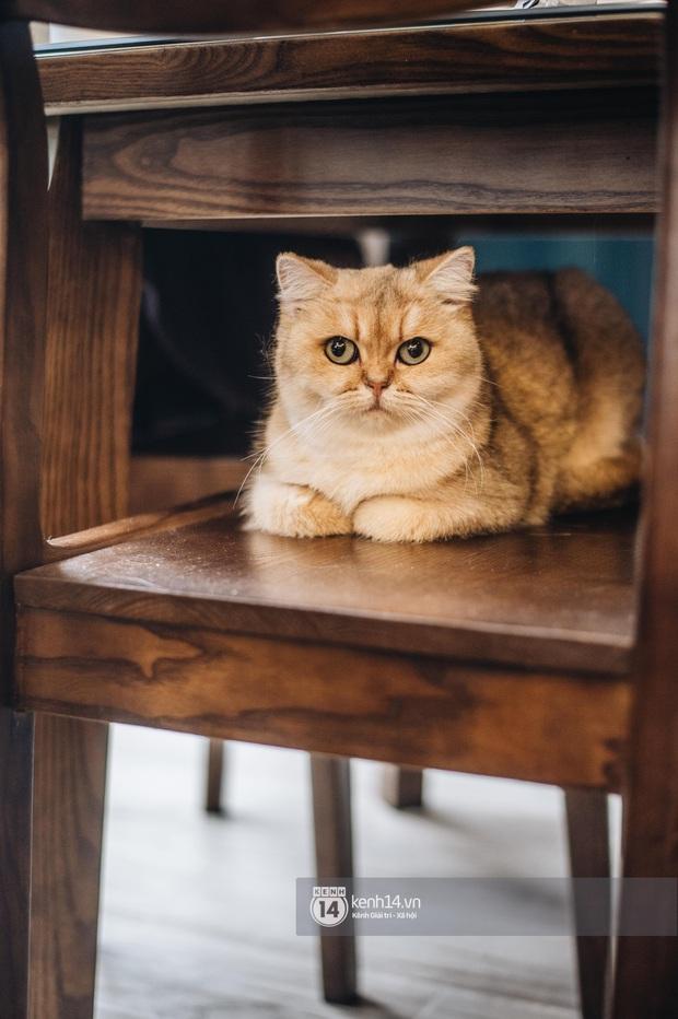 Thằng điên trở về từ Pháp với 500kg hành lý + 8 con mèo và chuyện con sen nuôi dạy dàn đại boss nghìn đô - Ảnh 13.
