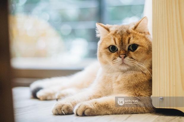 Thằng điên trở về từ Pháp với 500kg hành lý + 8 con mèo và chuyện con sen nuôi dạy dàn đại boss nghìn đô - Ảnh 5.