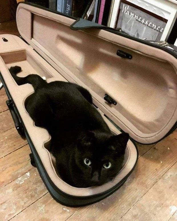 Những bức ảnh chứng minh mèo ở dạng thể lỏng, có thể chảy gọn vào bất kỳ nơi đâu - Ảnh 12.