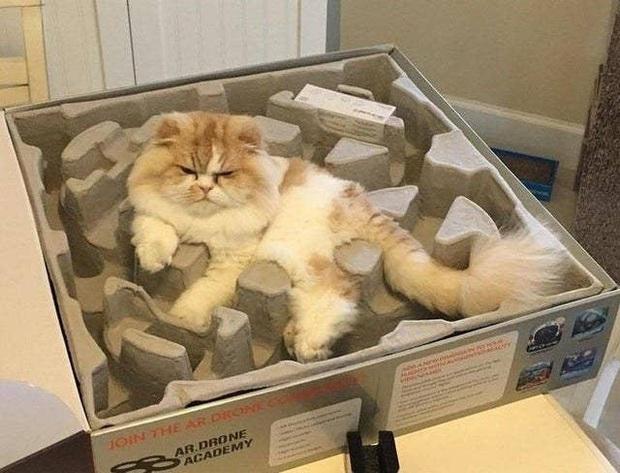 Những bức ảnh chứng minh mèo ở dạng thể lỏng, có thể chảy gọn vào bất kỳ nơi đâu - Ảnh 13.