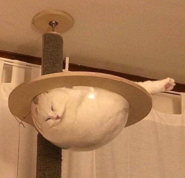 Những bức ảnh chứng minh mèo ở dạng thể lỏng, có thể chảy gọn vào bất kỳ nơi đâu - Ảnh 14.