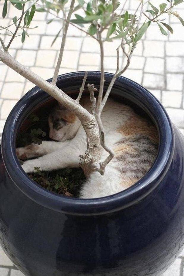 Những bức ảnh chứng minh mèo ở dạng thể lỏng, có thể chảy gọn vào bất kỳ nơi đâu - Ảnh 15.