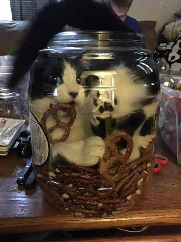 Những bức ảnh chứng minh mèo ở dạng thể lỏng, có thể chảy gọn vào bất kỳ nơi đâu - Ảnh 17.