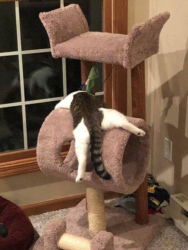 Những bức ảnh chứng minh mèo ở dạng thể lỏng, có thể chảy gọn vào bất kỳ nơi đâu - Ảnh 18.