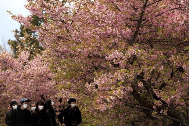 Covid-19: Mỹ hoãn hội nghị thượng đỉnh với ASEAN, Nhật Bản hủy lễ hội hoa anh đào  - Ảnh 2.
