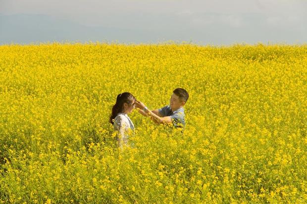 Dân mạng sửng sốt trước cánh đồng hoa cải vàng đẹp như tranh vẽ có thật tại Đà Lạt, xem ảnh mà ngỡ đâu nước Nhật xa xôi - Ảnh 2.