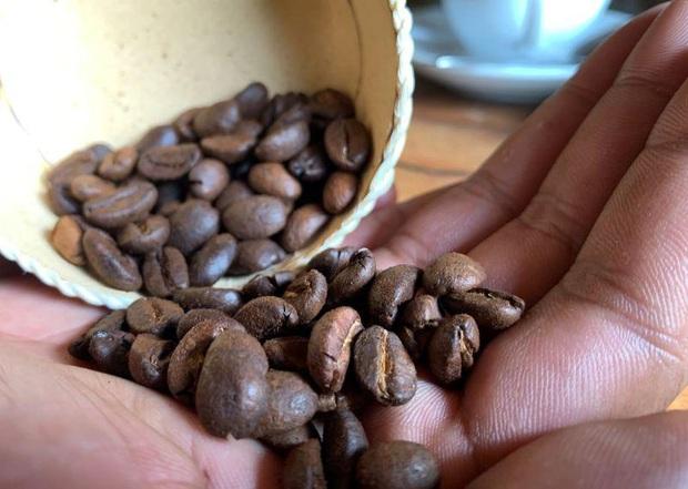 Không chỉ phân chồn hay voi nổi danh trong làng cà phê, phế thải từ dơi cũng là một trong những loại hạt cực phẩm đắt tiền nhất thế giới - Ảnh 3.