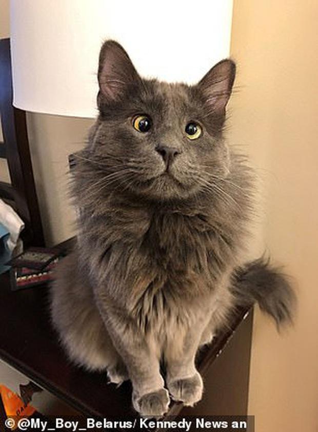 Sở hữu lượt người theo dõi khủng trên mạng xã hội, mèo mắt lé gây dựng gần 300 triệu cho quỹ từ thiện nhờ bán hình ảnh - Ảnh 3.