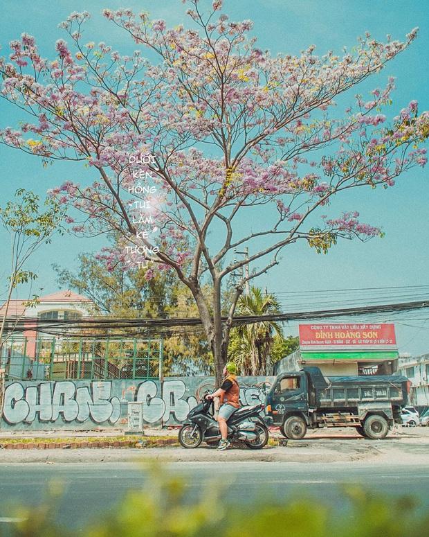 """Hội Sài Gòn rục rịch check-in """"con đường hoa anh đào"""" lên hình tình như phim điện ảnh, ai đi ngang cũng muốn dừng lại sống ảo - Ảnh 14."""