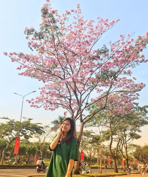 """Hội Sài Gòn rục rịch check-in """"con đường hoa anh đào"""" lên hình tình như phim điện ảnh, ai đi ngang cũng muốn dừng lại sống ảo - Ảnh 2."""