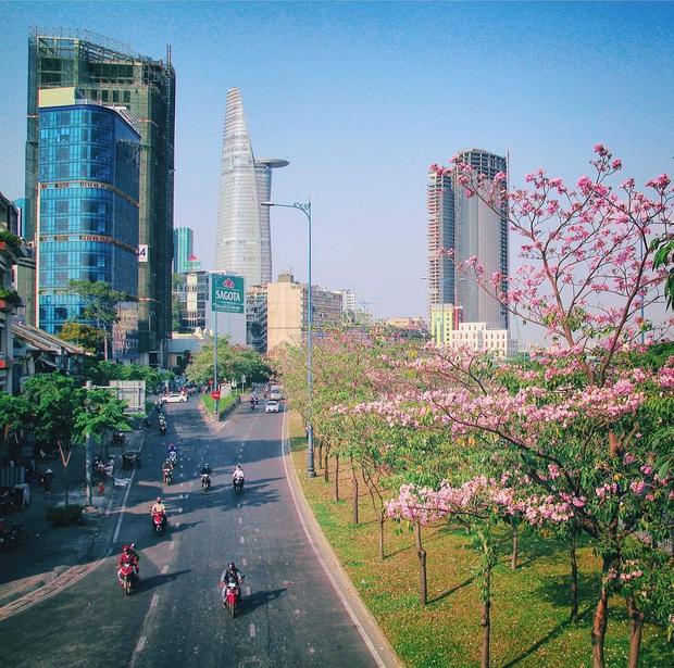 """Hội Sài Gòn rục rịch check-in """"con đường hoa anh đào"""" lên hình tình như phim điện ảnh, ai đi ngang cũng muốn dừng lại sống ảo - Ảnh 4."""