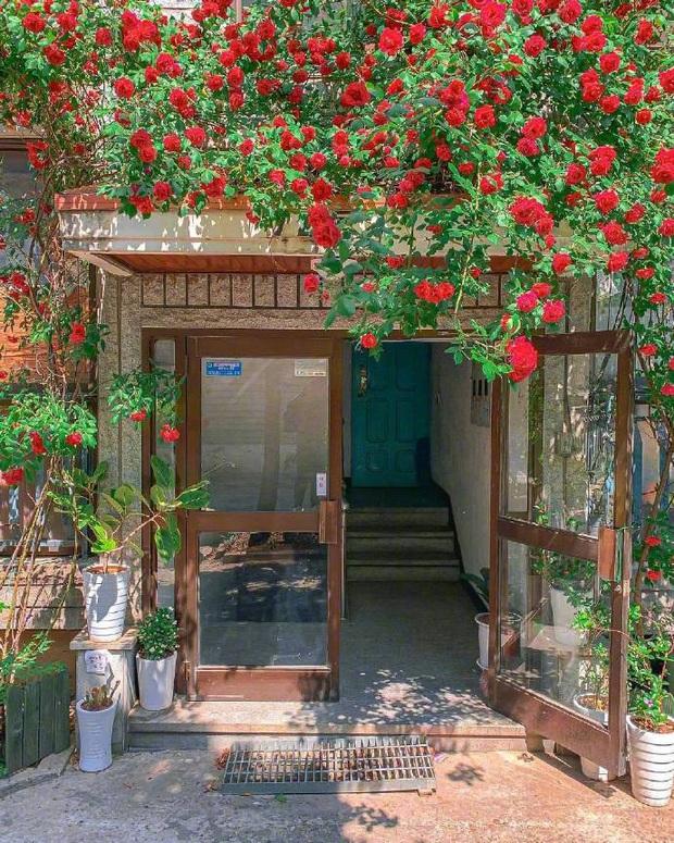 Chỉ là những bức ảnh trong trẻo chụp hiên nhà trên đường phố Nhật Bản nhưng chắc chắn sẽ khiến bạn cảm thấy bình yên - Ảnh 1.
