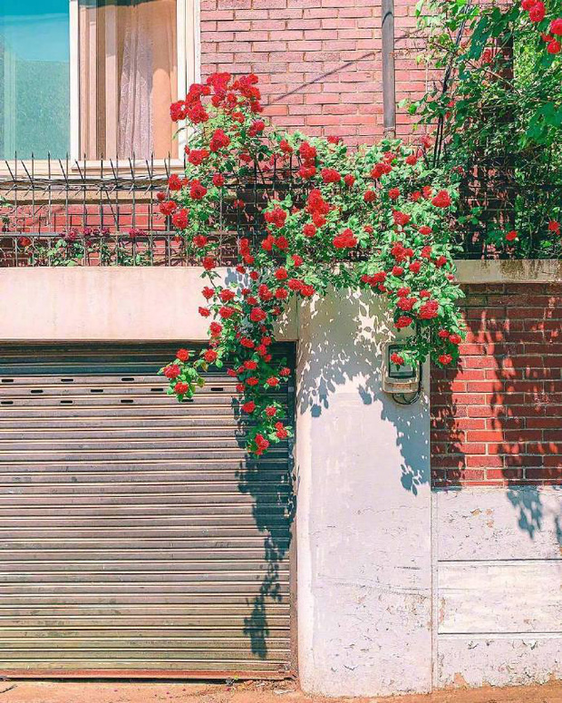 Chỉ là những bức ảnh trong trẻo chụp hiên nhà trên đường phố Nhật Bản nhưng chắc chắn sẽ khiến bạn cảm thấy bình yên - Ảnh 6.