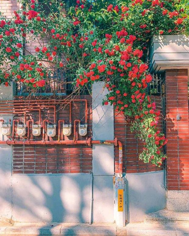 Chỉ là những bức ảnh trong trẻo chụp hiên nhà trên đường phố Nhật Bản nhưng chắc chắn sẽ khiến bạn cảm thấy bình yên - Ảnh 5.